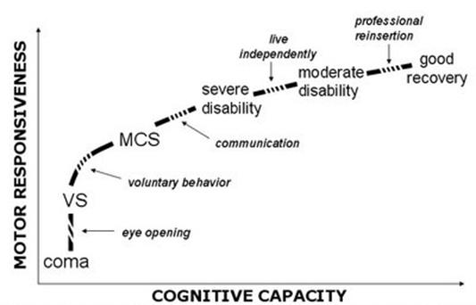 Responsiveness vs Cognitive capacity